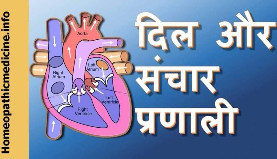 हृदय की संरचना – हृदय कैसे कार्य करता है?