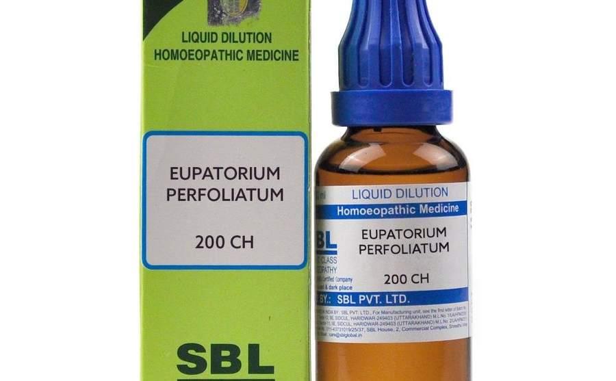 यूपेटोरियम परफोलियेटम – Eupatorium Perfoliatum In Hindi